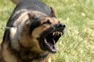 Military_dog_barking
